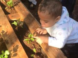 CEI Jardim Copacabana cria horta pedagógica utilizando paletes